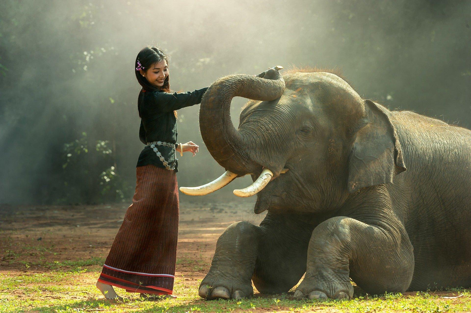 象と戯れる女性