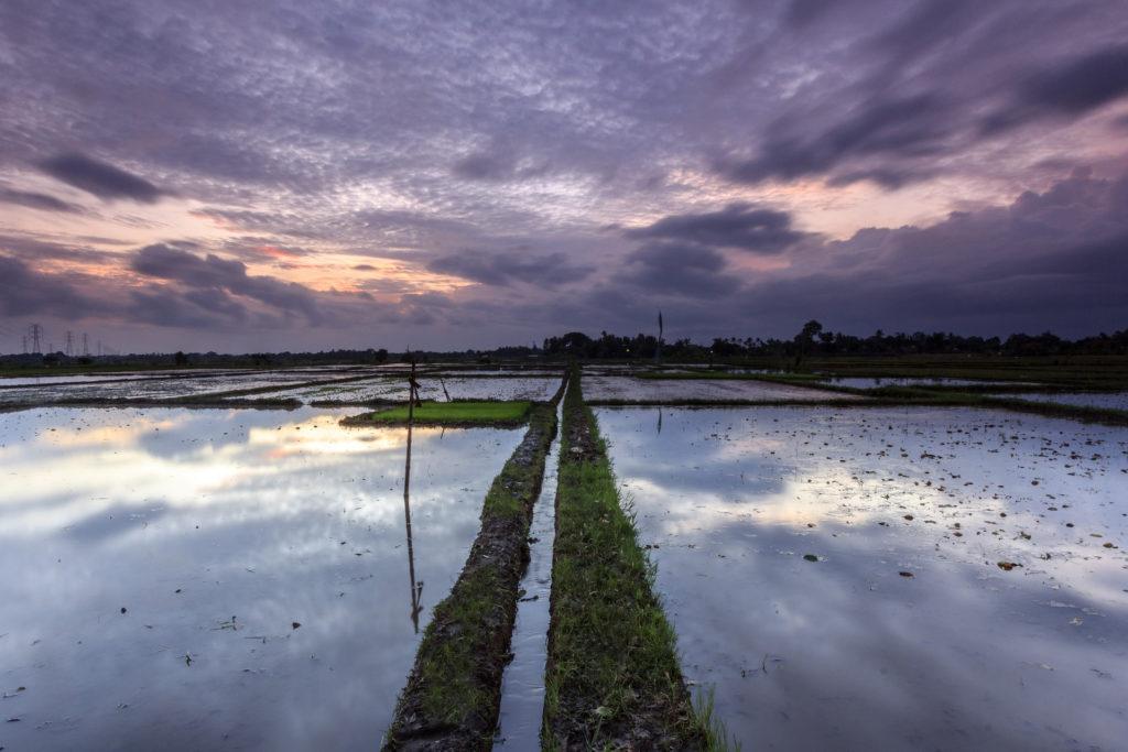 インドネシアの田んぼの全体写真